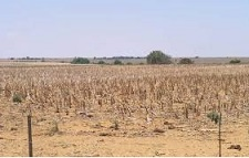 Drought in Northern Cape, South Africa